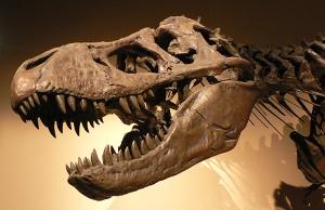 Palais_de_la_Decouverte_Tyrannosaurus_rex_p1050042-sm